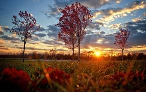sunset, Sun, autumn, trees, beautiful