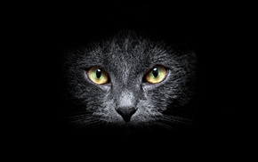 black, cat, eyes, muzzle, background