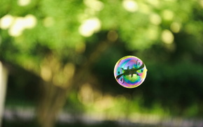 reflection, greenery, ball, photo, macro