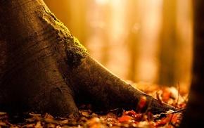 macro, autumn, foliage