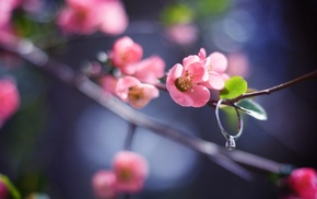 flower, petals, leaves, branch, pink