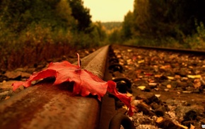 road, leaf, autumn