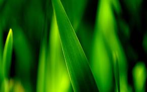 grass, macro, leaf, greenery