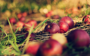 apples, macro, grass, Earth, bokeh