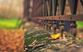 macro, leaf, fence