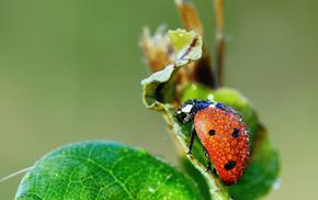 macro, drops, leaf