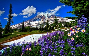 mountain, landscape, nature, snow, flowers
