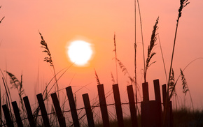 fence, morning, grass, pink, Sun