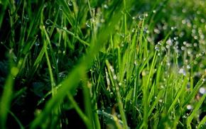 macro, grass, dew