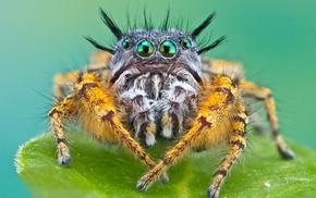 spider, macro