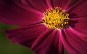 flowers, flower, petal