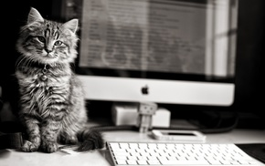 kitten, animals, computer