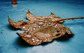 капли, клен, природа, красиво, лист