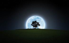 sky, tree, stunner, stars, night