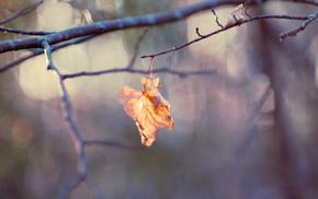 branch, macro, leaf
