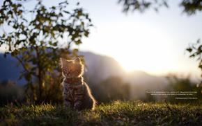 kitten, nature, animals, grass, light