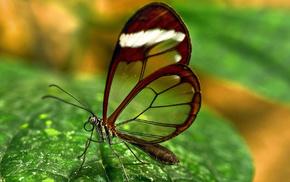 wings, greenery, butterfly, macro