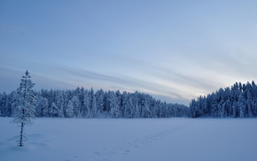 поле, снег, Зима, деревья