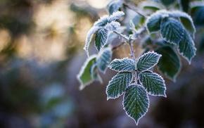 macro, leaf