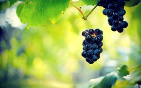 leaves, grapes, nature, berries