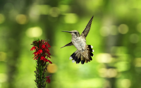 bird, bokeh, background, animals, flower