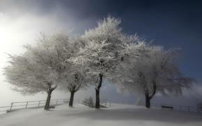 зима, деревья, природа, снег