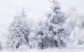 nature, snow, winter