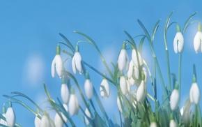 white, macro, flowers