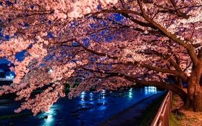 tree, sakura, spring