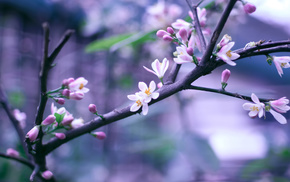 bokeh, bloom, flowers, spring, branch