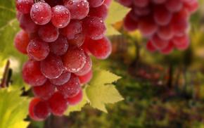 виноград, капли, листья, вкусно, Гроздь