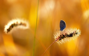 summer, butterfly, nature