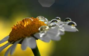 drops, nature, flowers, macro, flower