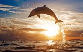 clouds, sea, splash, animals, sunset