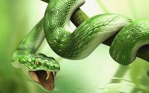 animals, leaves, snake, green, branch