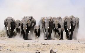 слоны, природа, строй, животные