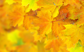 macro, leaves, bokeh, autumn