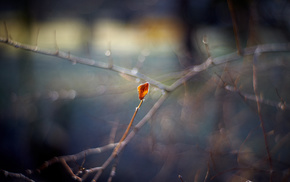 highlights, leaf, autumn, twigs, bokeh