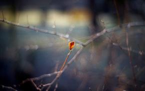 highlights, leaf, autumn, twigs, bokeh