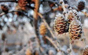 bokeh, nature, snow, twigs, cones