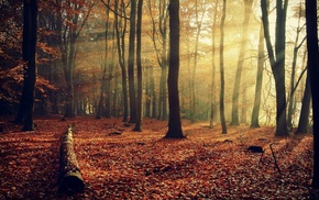nature, trees, autumn, leaves, rays