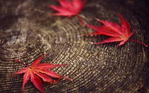 motion blur, macro, leaves