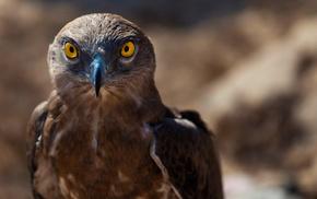 animals, predator, bird