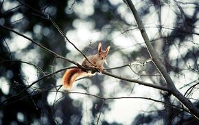 forest, nature, squirrel, animals