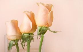 vase, roses, flowers