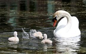 drops, white, splash, animals, pond