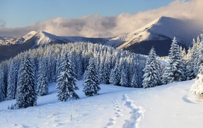 winter, Christmas tree, snow, mountain, nature