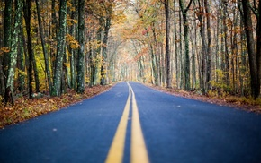 nature, road, forest, autumn