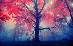 forest, red, leaves, mist, nature