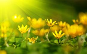 rays, petals, flowers, bokeh, macro